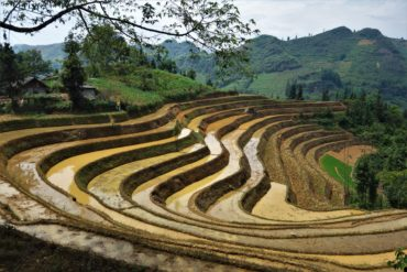 north vietnam rice paddies