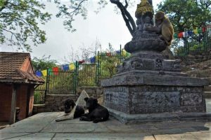 Things to do in Kathmandu monkey temple