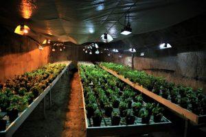 basil underground in tunnels