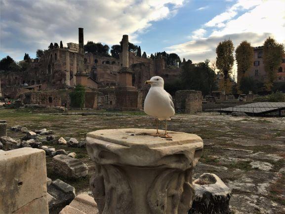 Seagull roman forum