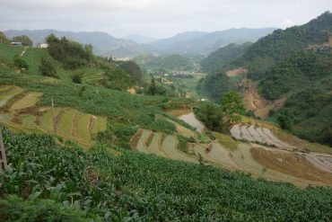 Bac ha hills rice