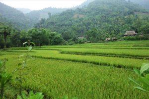 ha giang vietnam rice paddies