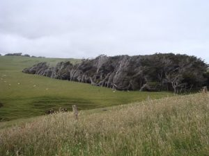 things to do in the Catlins slope point trees