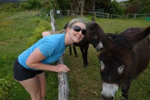 things to do in the Catlins donkeys