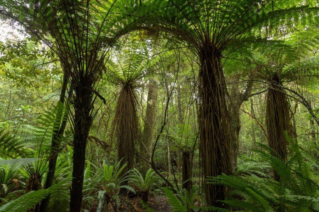 Things to do in The Catlins – New Zealand's Isolated Wild Paradise
